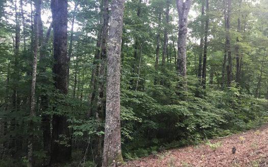 TBD Fenley Forest Trail